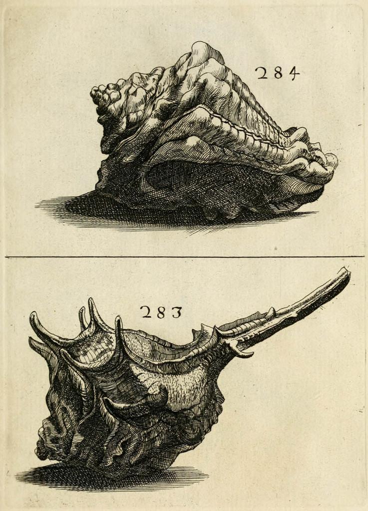 Da Ricreatione dell'occhio e della mente nell'osservatione delle chiocciole (Buonanni 1681)