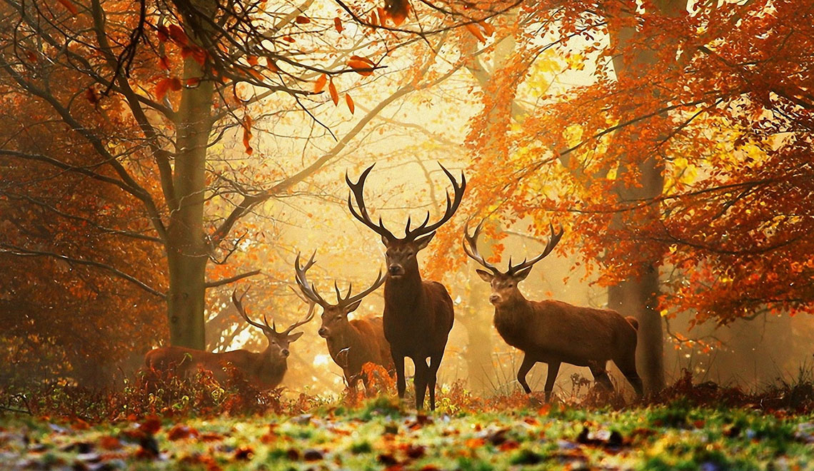 Cervo autunno