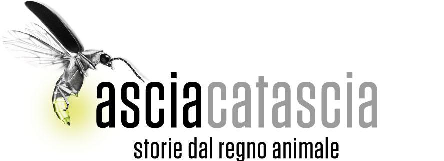 AsciaCatascia